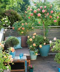 roses on balcony patio and terrace