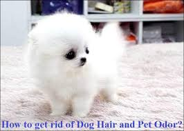how to get rid of dog hair and pet odor