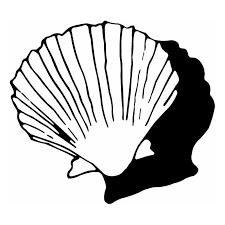 Hoosierdecal Cool Seashell Nautical Vinyl Decal For Boat Car Window 39 Hoosierdecal