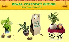 corporate diwali green gifts now pot li
