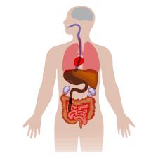 Anatomy Figure Vector Clipart image - Free stock photo - Public ...