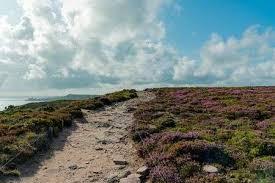 Coastal Hiking Trail Through Lilac And Purple Heath Meadows On ...