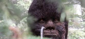 Image result for bigfoot