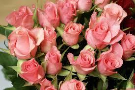 صور عن الورد صور عن الورد رؤعة مفيش اجمل منها كلام نسوان