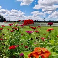 rosy tomorrows heritage farm rosy