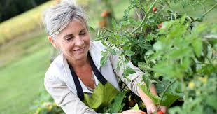vegetable garden ideas types on a budget