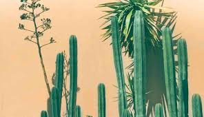Top 12 Cacti And Succulents For Full Sun Succulent Plant Care