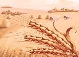uses of wheat germ oil explained in brief