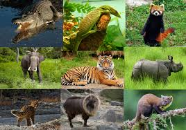 Image result for wildlife picturs of nepal