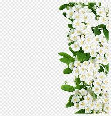 Page 8 Flower Border Cutout Png Clipart Images Pngfuel