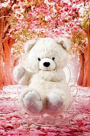 hd wallpaper plush toy sitting