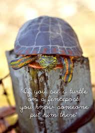 If You See A Turtle On A Fencepost Turtle Turtle Painting Eastern Painted Turtle