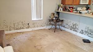 Clean or Pitch Belongings After Mold Removal? | Angie's List