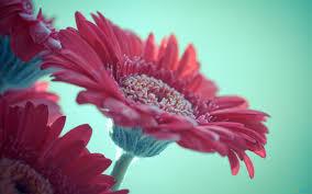اجمل زهور طبيعية جميلة صور مناظر زهور تفرح القلب اجمل بنات