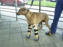 k9 dog orthotics prosthetics