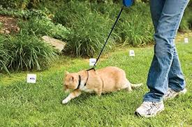 Amazon Com Petsafe Premium In Ground Cat Fence Petsafe Wireless Pet Fence Products Pet Supplies