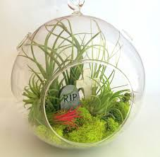 air plant theme large hanging