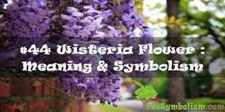44 wisteria flower meaning symbolism