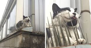 cats are evolving scared people are