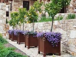 row of citrus tree planters tree planters