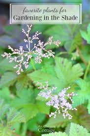 plants for gardening in the shade
