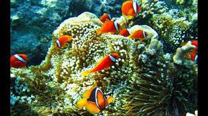 خلفية حوض أسماك متحركة للأندرويد Aquarium Live Wallpaper Pro