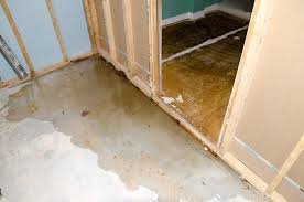 Water Damage And Basement Bugs