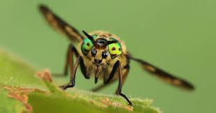 you ve been warned about horse flies
