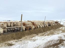 Portable Fencing Tips For Rotational Grazing Of Cattle Canadian Cattlemen