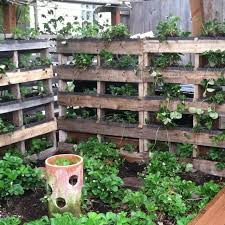 pallets to make vertical strawberry bed