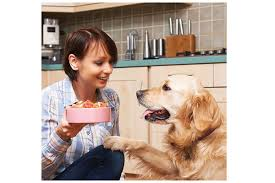 what to feed a dog with arthritis