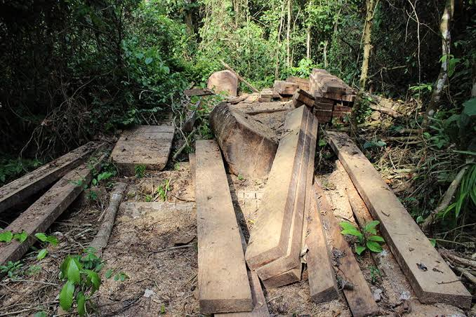 """Image result for World Bank funded 345 forestry projects i"""""""