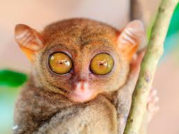 This Animal's Eye Makes Up Almost Half of Its Body