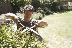 California Law For Homeowners Maintaining Shrubbery Property Line Home Guides Sf Gate