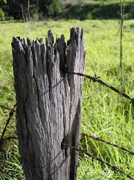 Free Images Tree Nature Grass Branch Fence Post Wood Field Farm Trunk Old Wire Wildlife Rural Green Fencing Gate Security West Barbed Western Protection Woody Plant Outdoor Structure 1712x2288