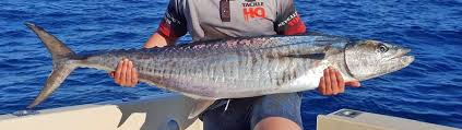 Broome fishing community buoyed with excitement by trailblazing FADs  deployment - Recfishwest