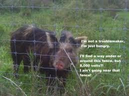 Anti Pig Electric Fences