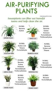 Pin by Janelle Wells on Plants in 2020 | Air purifying plants, Plants,  Plants indoor apartment