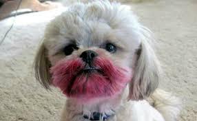 makeup dog names saubhaya makeup