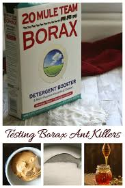 borax ant s testing 5 diffe