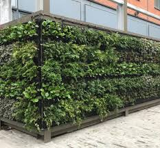 Ivy Green Screen Living Wall And Green Roof Supply Install Uk