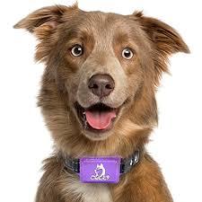 Small Dog Shock Collar Shock Collar Dog Shock Collar Shock Collar For Small Dogs Bark Collar Small Dog S Dog Shock Collar Dog Barking Large Dog Crate