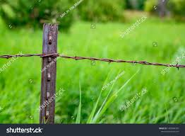 Metal T Post Barbed Wire Fencing Stock Photo Edit Now 1450084799
