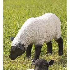 arkadelphia suffolk sheep grazing sheep