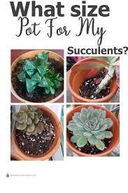 succulents pot size how big a pot do