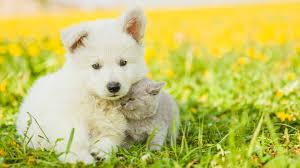wallpaper puppy kitten funny s