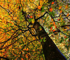 the stained glass tree photography by