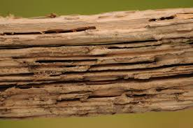 warning signs of termites pest