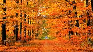 autumn color desktop backgrounds on