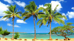 caribbean beach wallpapers on wallpaperplay